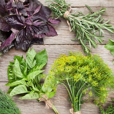 ervas-e-especiarias