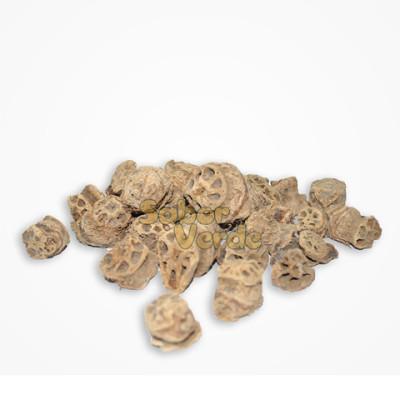 raiz-de-lotus